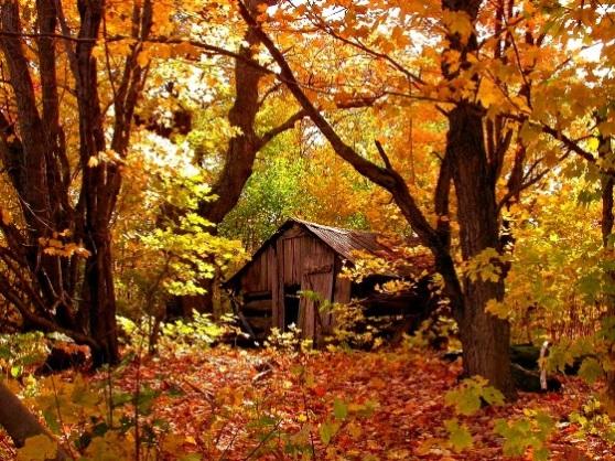 automne_blog